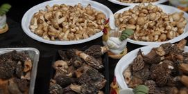 Photo of 22nd Wild Mushroom and Natural Food Products fair in Setcases