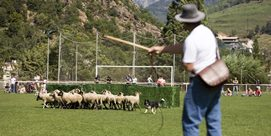 Photo of International Sheepdog Trials in Ribes de Freser