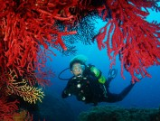 Scuba diving in Medes Islands, Esther Torrent